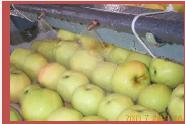 Fruit Guard